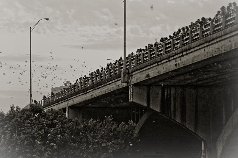 Bats Bridge