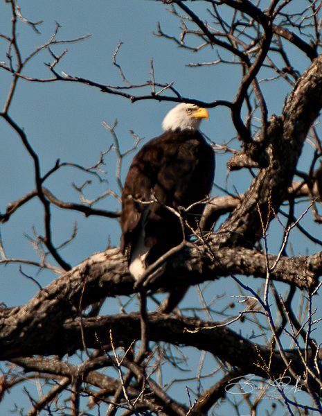 Llano, Texas Eagles Nest © copyright 2012, Robert D. Barrett