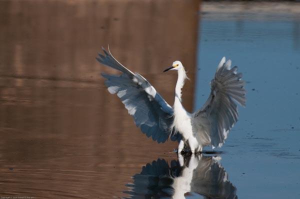 Fishing Bird 1