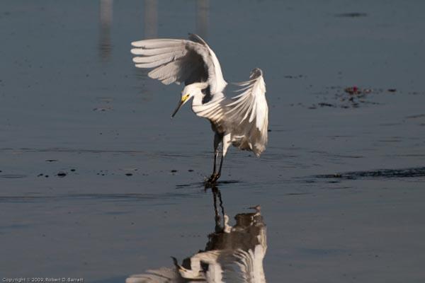 Fishing Bird 2