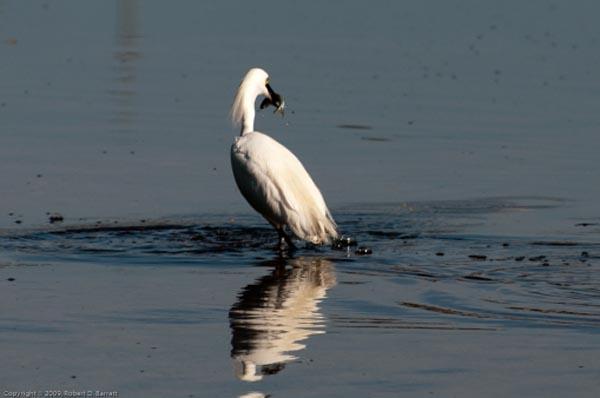 Fishing Bird 3
