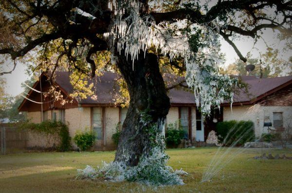 DSC 4157 600x398 - Ice Garden?...